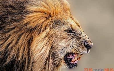 Jak uzyskać zasiłek macierzyński z ZUS- na umowie zlecenie, czyli jak wyszarpać coś z paszczy lwa.